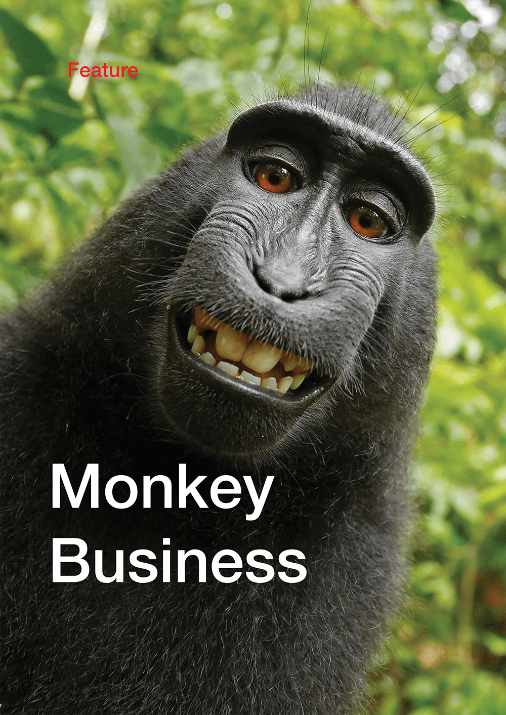 Monkey_Business_1000